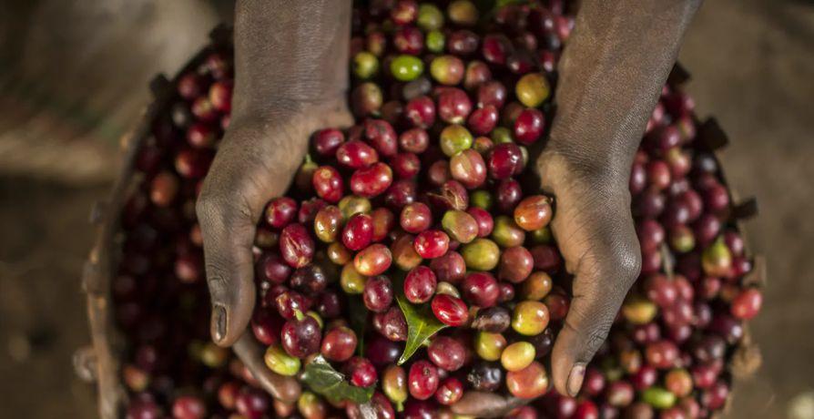 Какво е specialty coffee (специално кафе) и защо е специално?